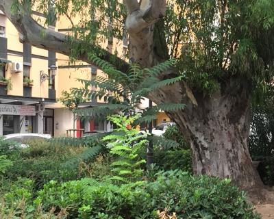 Projecte de remodelació del jardí Senyera